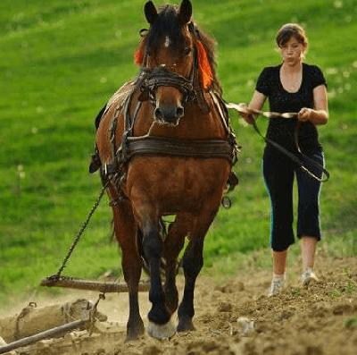 nyeleni, žemės ūkis